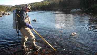 Electrofishing for salmon